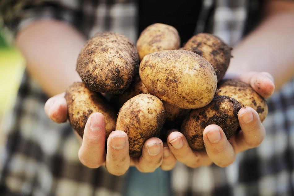 content-bioskartoffeln